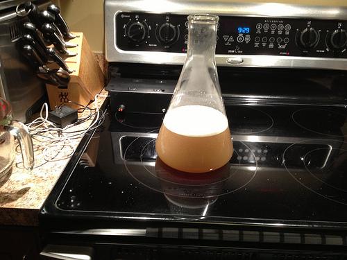 yeast starter